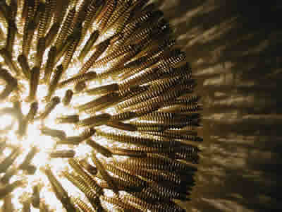 Spikey and ugly- pretty or not . The lamp is made of small brown screws there are a lot, unfunctional, and so purely hypothetical. Are the thousand screws that I had used made me bemused.To make light that's so intense,but altogether makes some sense. A collection of objects with light improvised through form, function, and aesthetic. The concept is simple and widely practiced throughout the product design industry of the past and present. This work is based on reclaiming the functions of used or found objects or materials. Their functions have been re-applied practically into lifestyle to describe new forms from old forms that function mainly as desirable objects with light. Light and sound are the principle mediums that conduct the processes and techniques needed to orchestrate this flurry of materials with forms and functions. These objects use material and form to sculpt light with rendering results that transform interior surfaces into highly decorative picturesque environments.